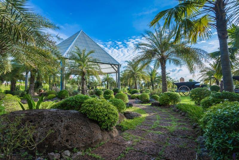 Cacto home no jardim da felicidade imagens de stock royalty free