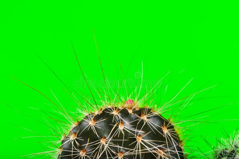 Cacto minúsculo no potenciômetro no fundo de néon brilhante Imag saturado fotos de stock royalty free