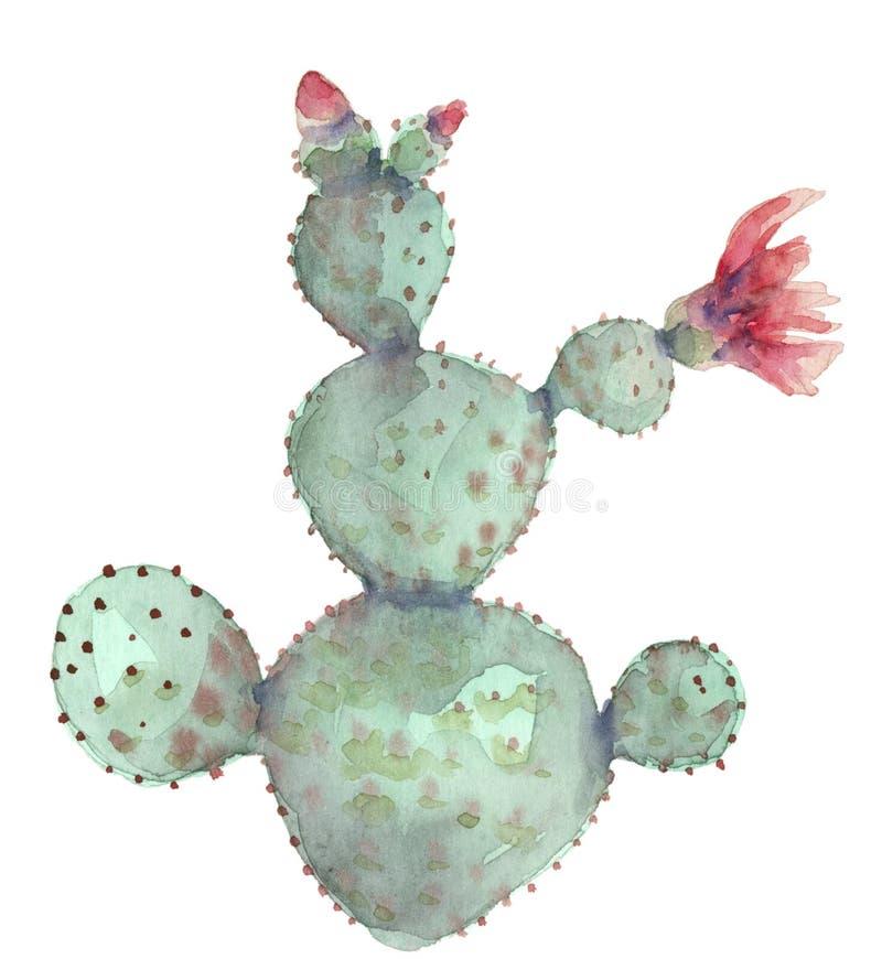 Cacto na flor ilustração stock