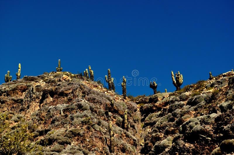 Cacto na montanha fotografia de stock