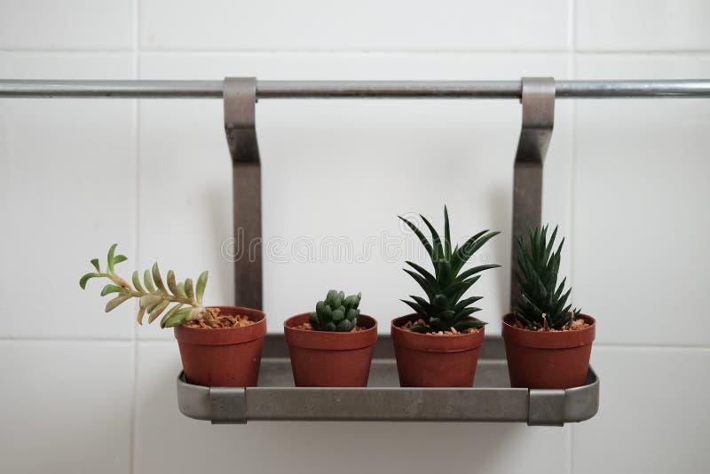 Cacto no banheiro fotografia de stock