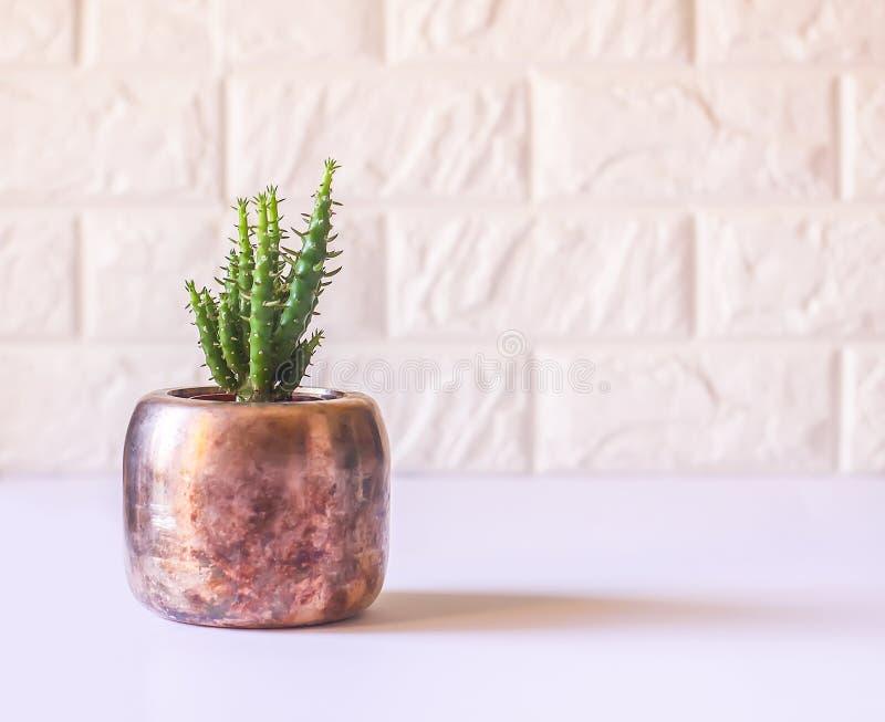 Cacto no potenci?metro de cobre Planta decorativa no interior moderno minimalistic da sala fotos de stock