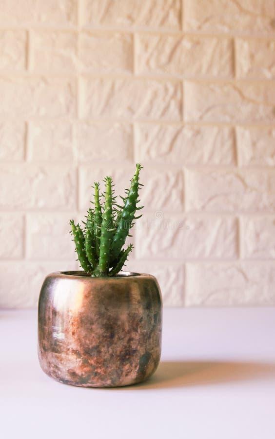 Cacto no potenci?metro de cobre Planta decorativa no interior moderno minimalistic da sala foto de stock