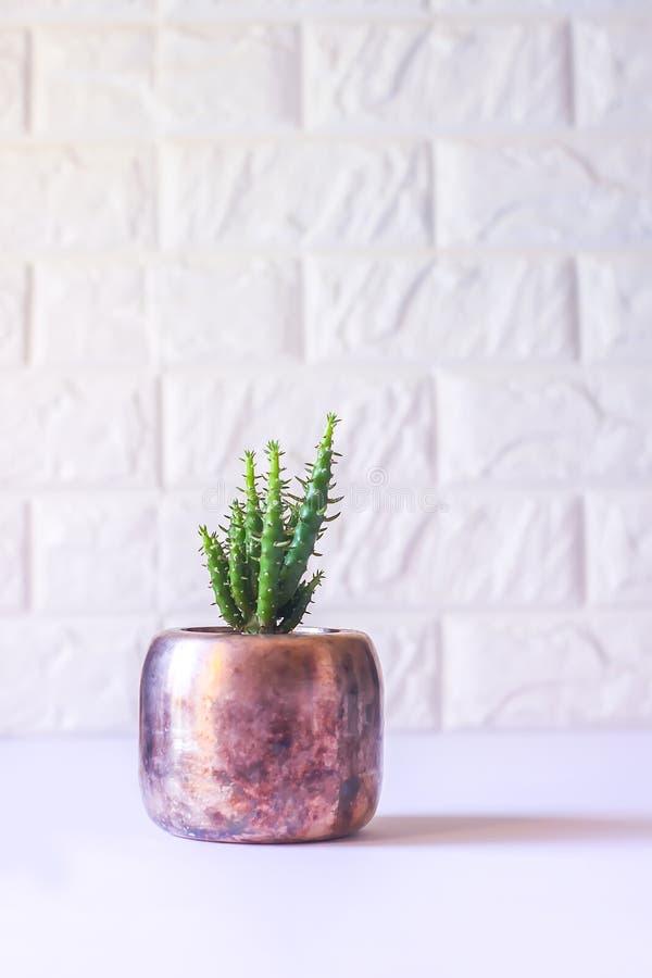 Cacto no potenci?metro de cobre Planta decorativa no interior moderno minimalistic da sala fotografia de stock royalty free