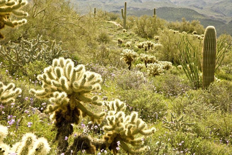 Cacto y Wildflowers del desierto imagen de archivo libre de regalías