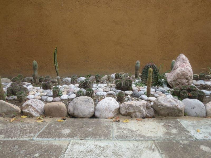 Cactoo Garten lizenzfreies stockbild