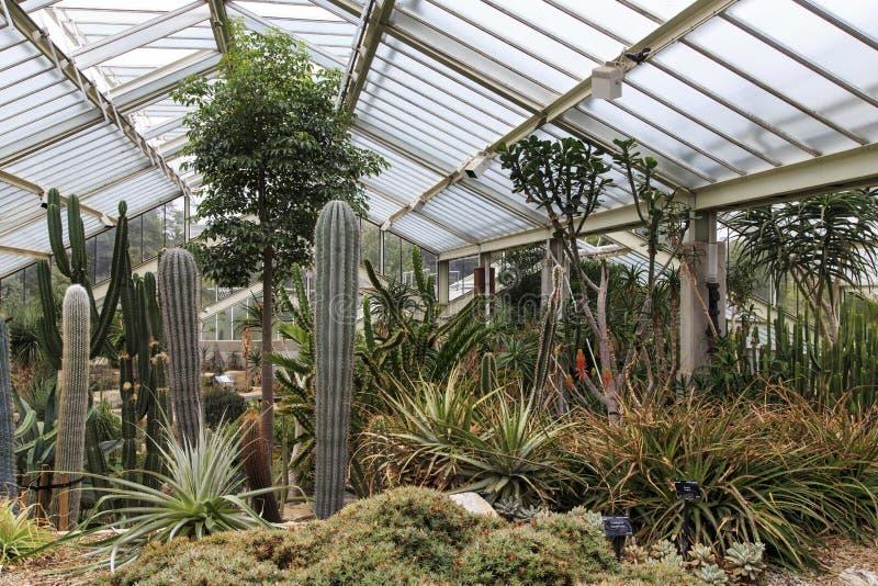 Cactos do jardim na princesa da estufa de Gales em jardins de Kew foto de stock