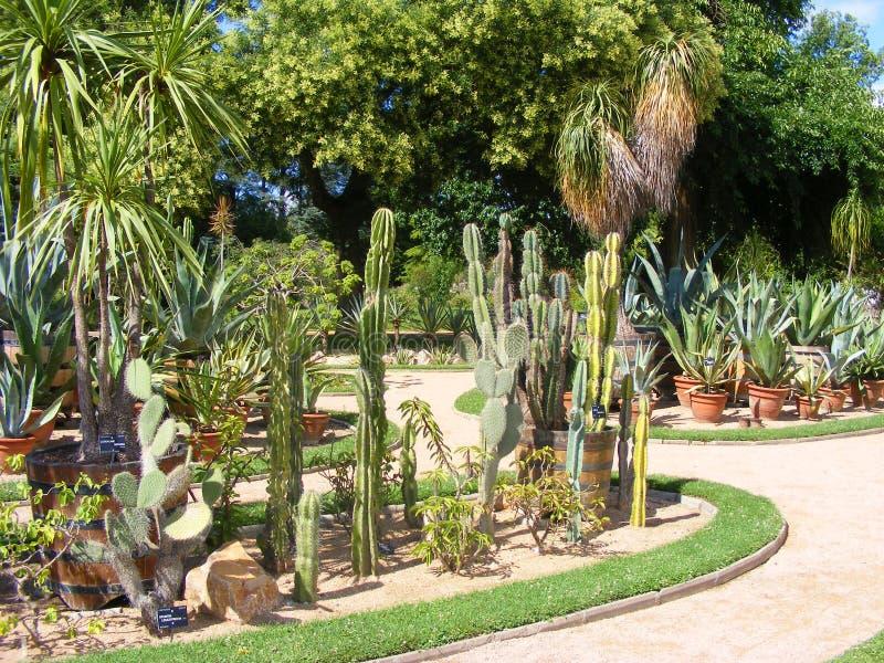 Cactos e plantas carnudas impressionantes no jardim botânico Tete d ou em Europa, Lyon, França Coleção do cacto e das plantas car imagem de stock royalty free