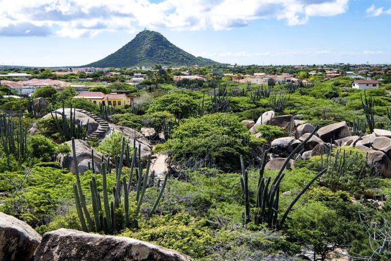 Cactos e rochas na frente de Hooiberg, Aruba fotografia de stock royalty free