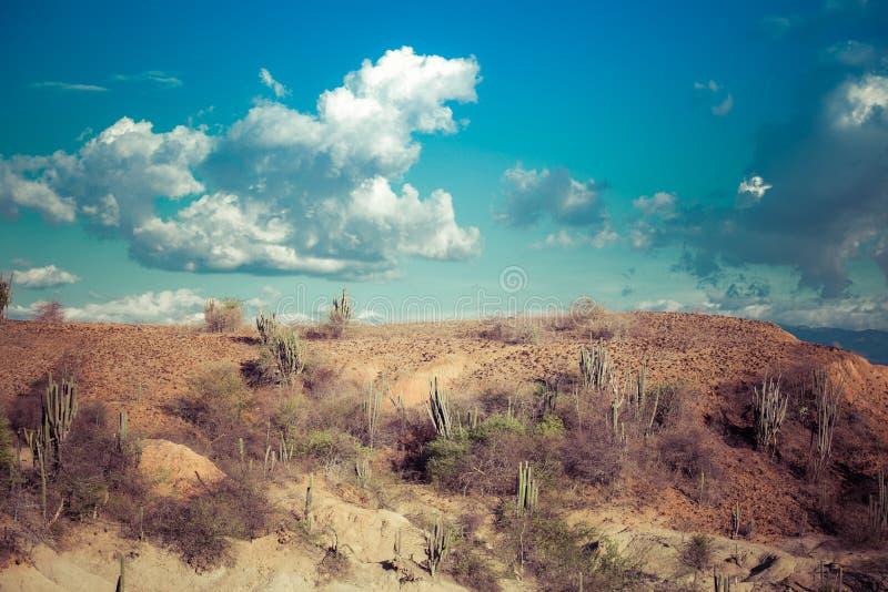 Cactos grandes no deserto vermelho fotos de stock