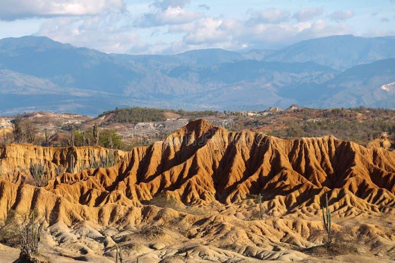 Cactos grandes no deserto vermelho, deserto do tatacoa, Colômbia, latino amer imagens de stock royalty free