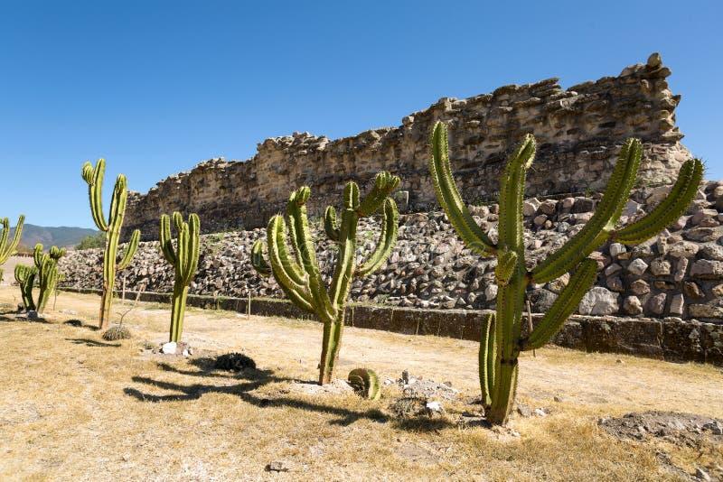 Cactos que alinham na frente da ruína de Zapotec em Mitla imagem de stock royalty free