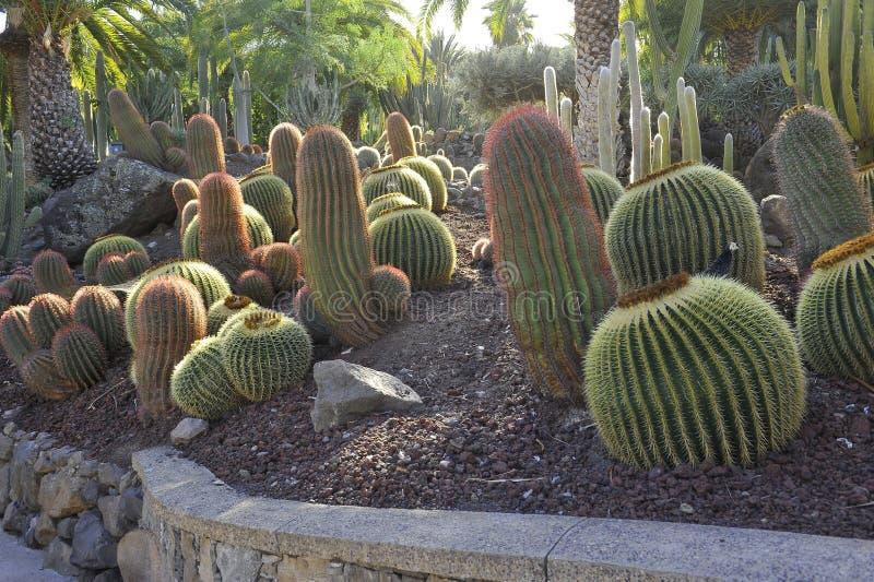 Cactualdea公园在大加那利岛 库存图片
