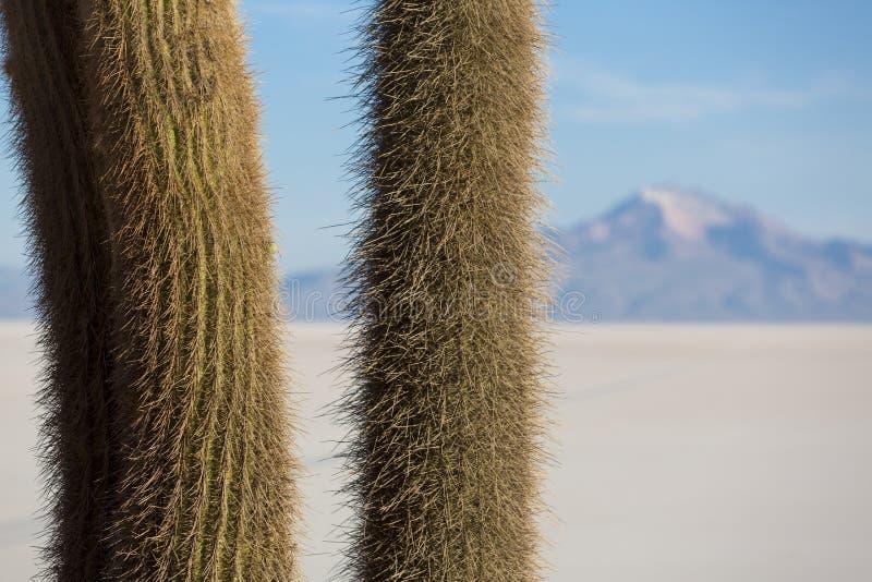 Cactus énorme et Salar d'Uyuni avec le ciel bleu, Bolivie photos stock