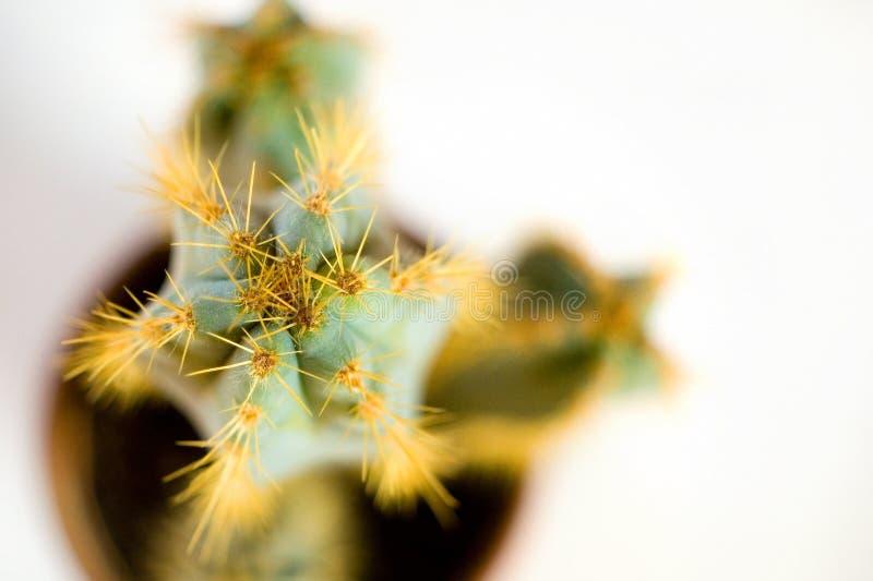 Cactus 03 fotografia stock libera da diritti