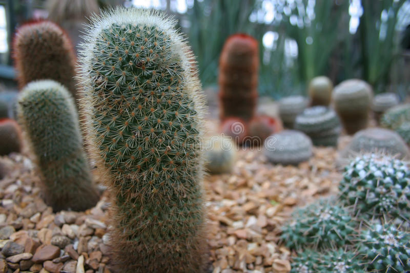 Download Cactus stock photo. Image of stone, sand, group, plant - 11955570