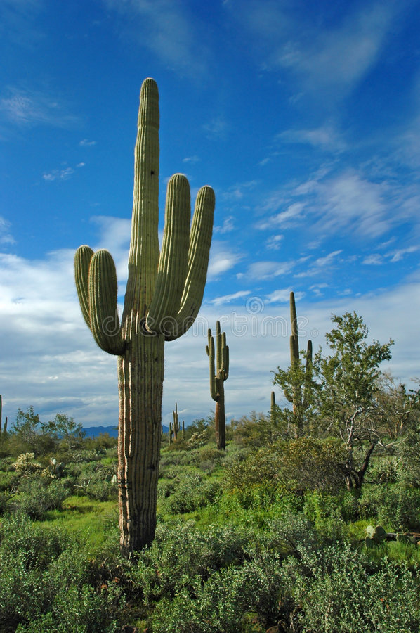 Download Cactus Stock Photos - Image: 1416953