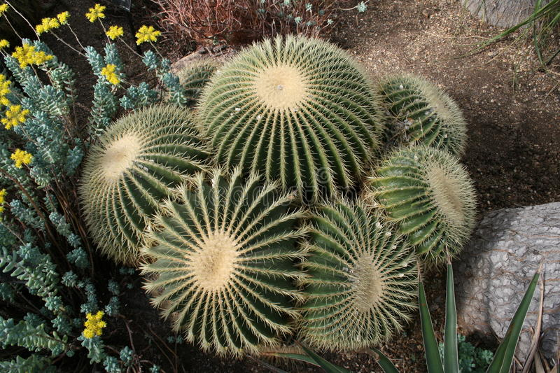 Download Cactus Stock Photography - Image: 15339372