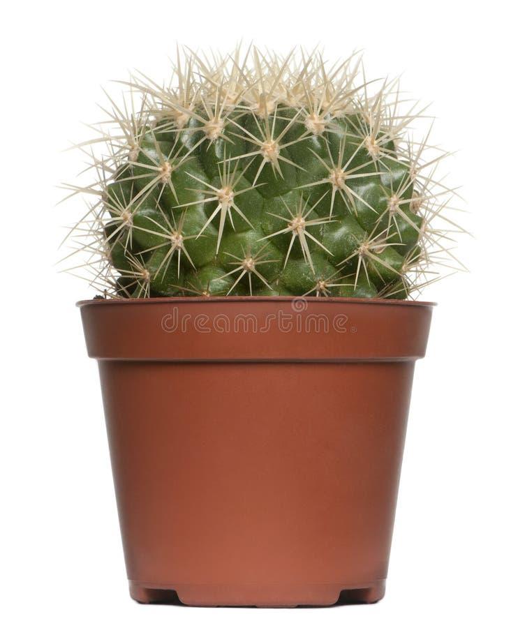 Download Cactus stock image. Image of white, cactus, thorns, shot - 17952859