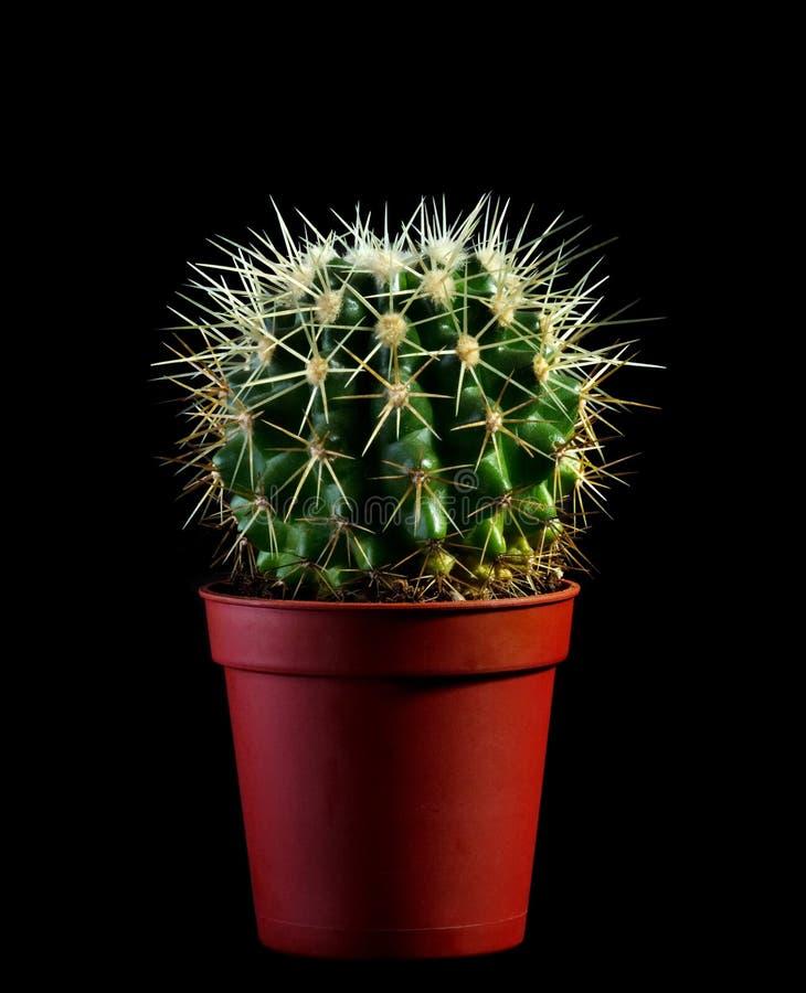 Cactus royalty-vrije stock afbeelding
