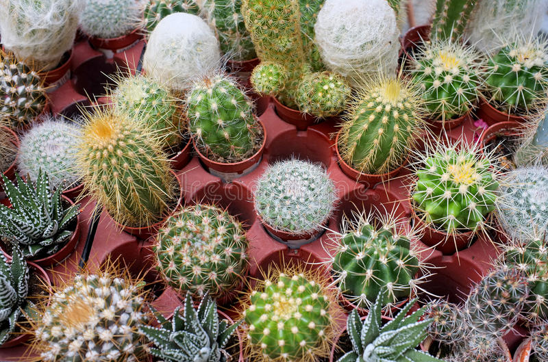Download Cactus stock photo. Image of close, cactus, outdoors - 25487132