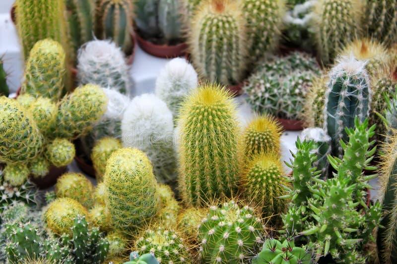 Download Cactus Royalty Free Stock Image - Image: 26644896
