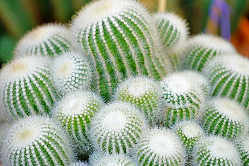Download Cactus stock image. Image of cacti, mountains, colorful - 29022965