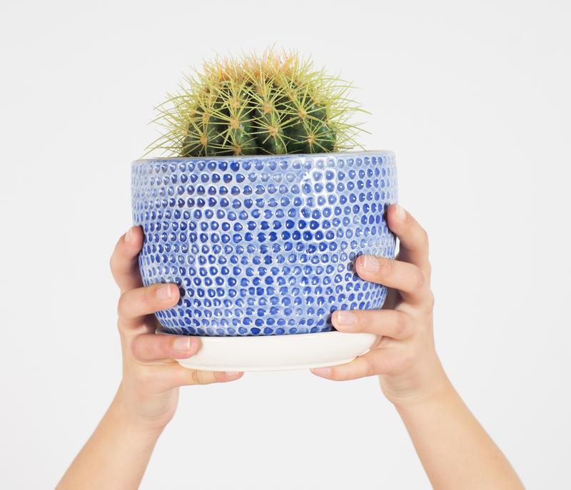 Download Cactus stock image. Image of plants, hand, person, planting - 29024241
