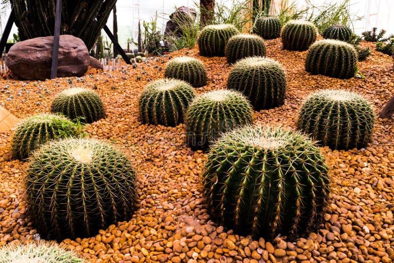 Cactus immagine stock immagine di caldo fiore esterno - Cactus da interno ...