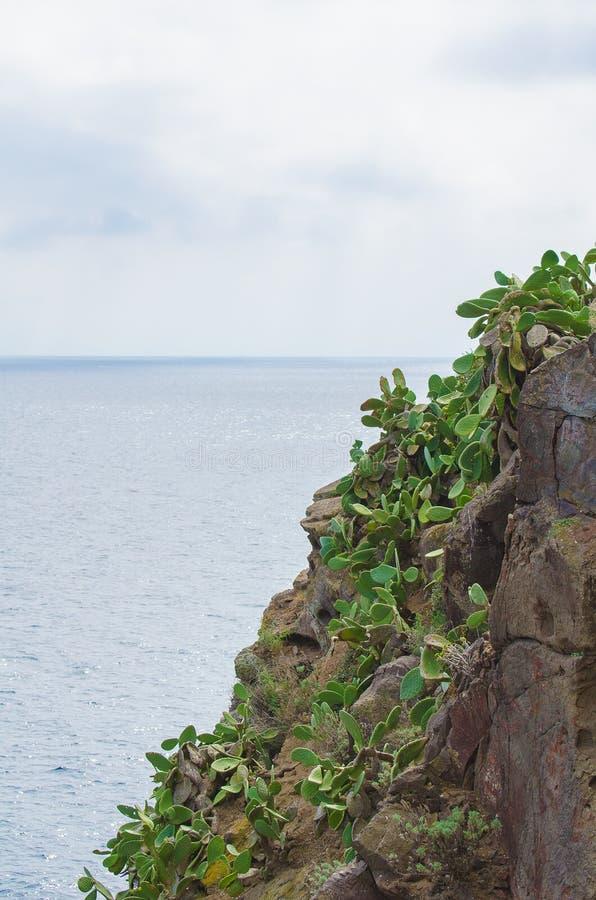 Download Cactus stock foto. Afbeelding bestaande uit italië, mening - 39118640