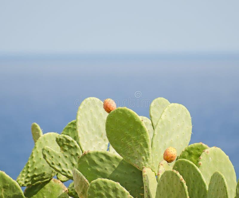 Download Cactus stock foto. Afbeelding bestaande uit barbarije - 39118648