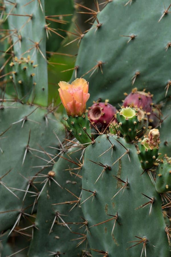 Download Cactus imagen de archivo. Imagen de color, lindo, cielo - 41914741