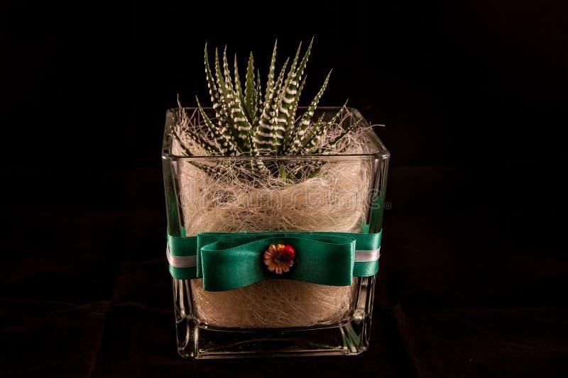Cactus02 fotos de archivo libres de regalías