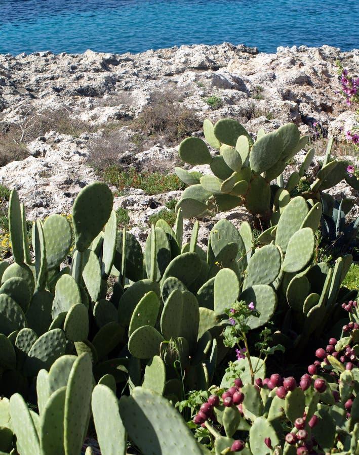 Free Cactus Stock Images - 4732944