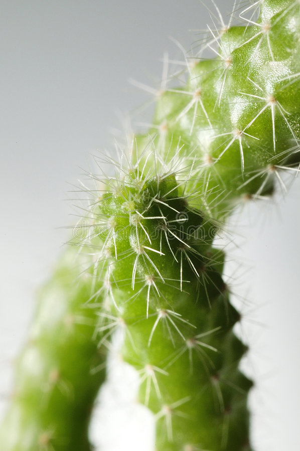 Free Cactus Stock Photography - 5666732