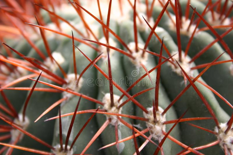 Cactus Free Stock Images