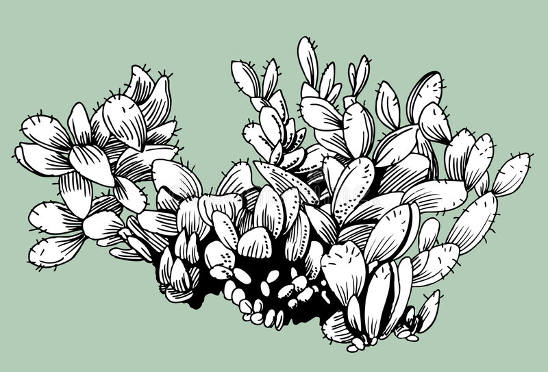 Cactus illustration libre de droits
