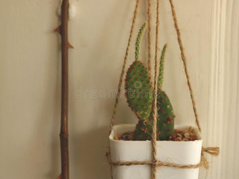 Cactus accrochant sur la porte en bois blanche images stock