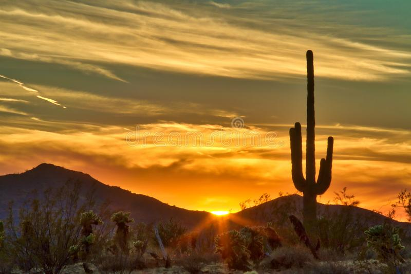 Cactus against a sunset behind mountains. A saguaro cactus silhouetted against a desert sunset in High Dynamic Range stock photography