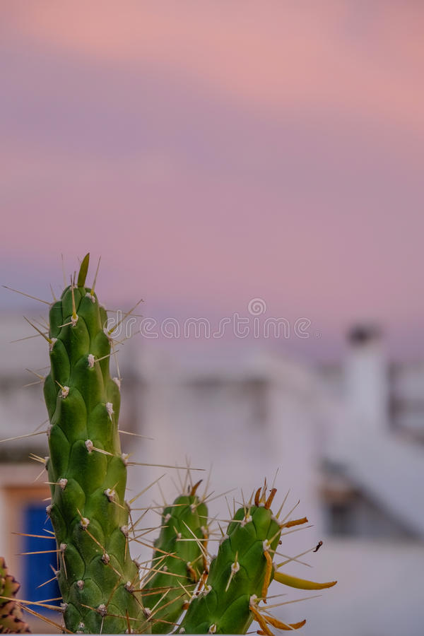 Cactus against a sunset sky. Close up of a cactus against a sunset sky royalty free stock photo