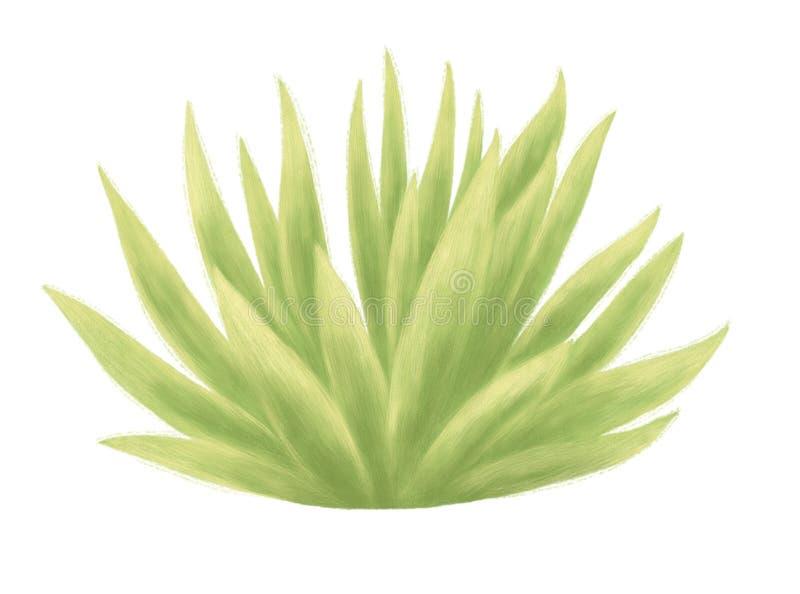 Cactus aislado en el fondo blanco imagen de archivo libre de regalías