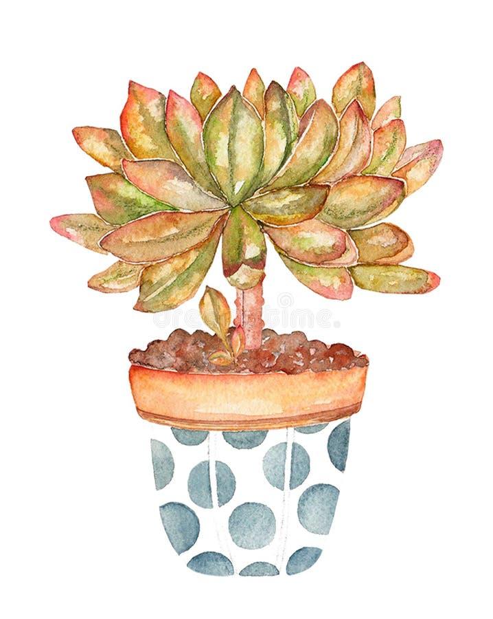 Cactus aislado en el fondo blanco en pote Ejemplo determinado dibujado mano de la acuarela ilustración del vector