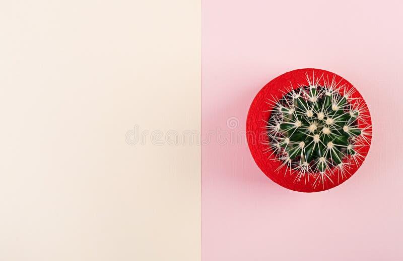 Cactus aislado en pote rojo Visi?n superior imagen de archivo