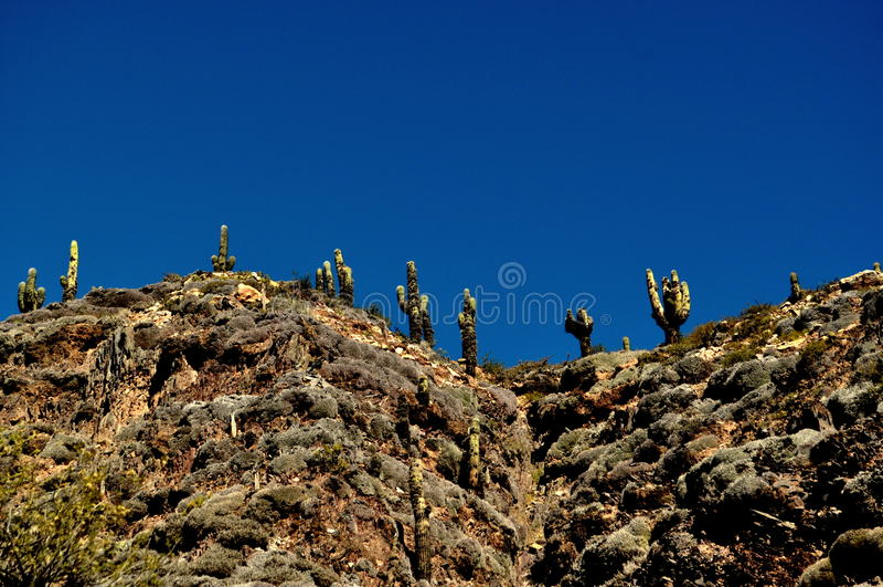Cactus alla montagna fotografia stock
