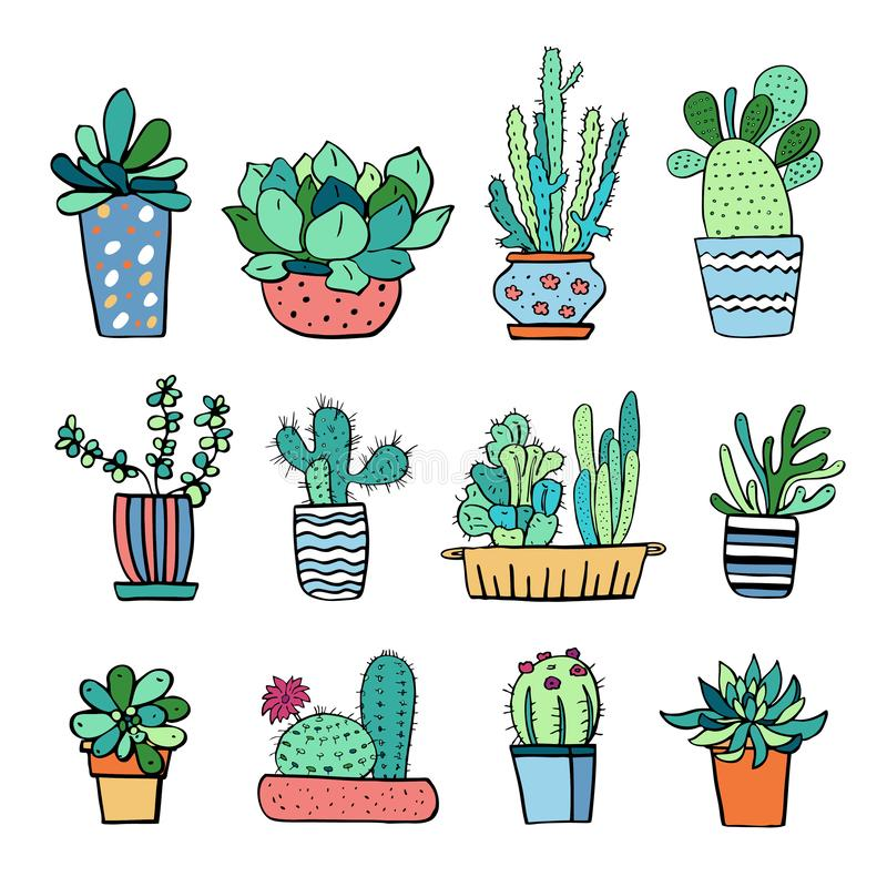 Free Cactus And Succulent Plants In Flowerpots. Vector Hand Drawn Outline Color Sketch Illustration Royalty Free Stock Images - 141213339