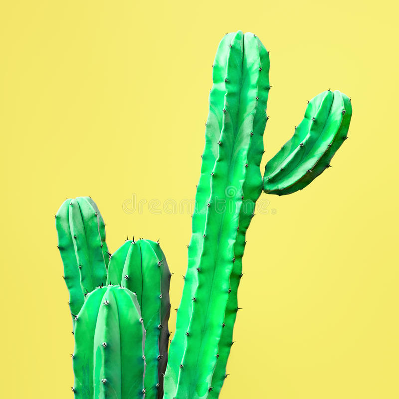 Cactus. Art Gallery Fashion Design. Minimal. Green Cactus Set. Art Gallery Fashion Design. Minimal Stillife. Concept on Yellow background royalty free stock photography