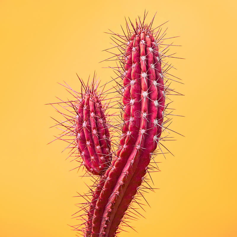 Cactus. Art Gallery Fashion Design. Minimal. Pink Cactus. Art Gallery Fashion Design. Minimal Stillife. Concept on Yellow background royalty free stock photos