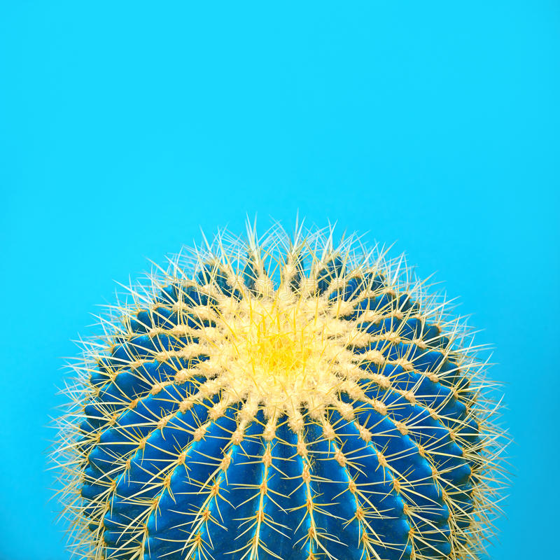 Cactus. Art Gallery Fashion Design. Minimal. Stillife. Blue cactus Mood. Trendy Bright Summer Colors. Creative Unusual Style. Fashion Concept, pink background royalty free stock photography