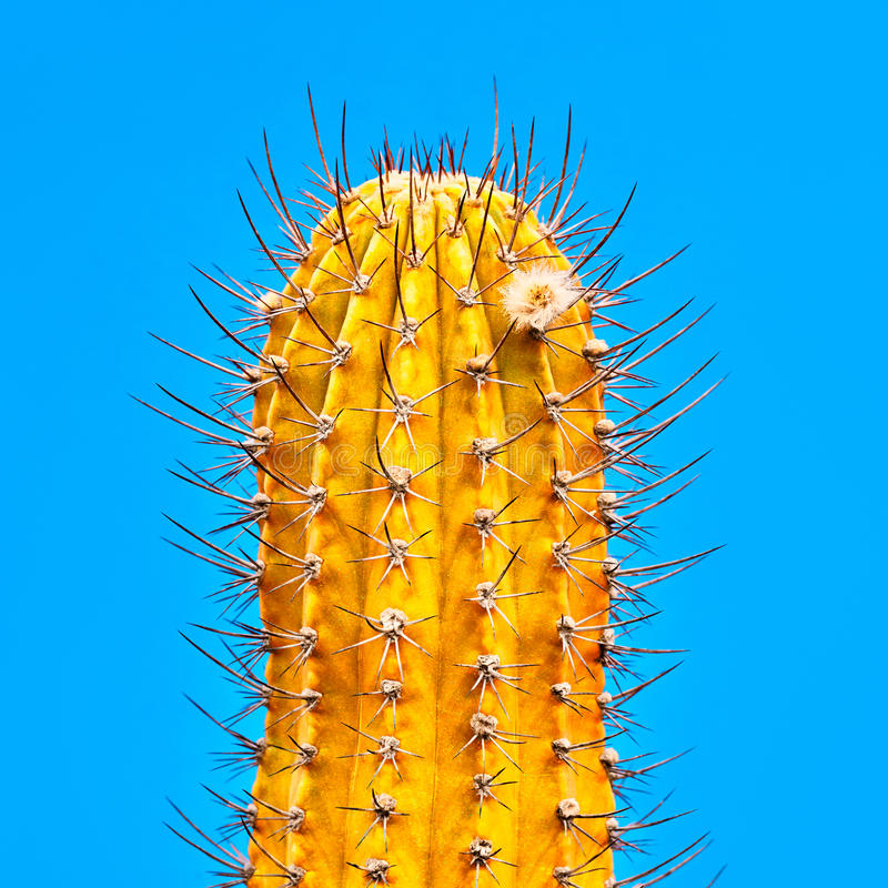 Cactus. Art Gallery Fashion Design. Minimal. Yellow Cactus Neon. Minimal Stillife. Art Gallery Fashion Design. Concept on Blue background. Detail stock photos