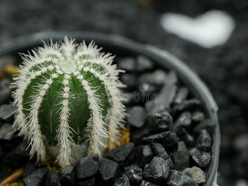 Cactus avec le coeur image stock